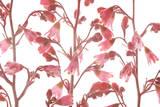 Coral Bell Flowers Fotodruck von Robert Llewellyn