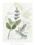 Rosemary & Sage Giclee Print by Elissa Della-piana