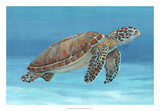 Ocean Sea Turtle I Giclee Print by Tim O'toole