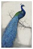 Peacock Blue I Giclée-tryk af Tim O'toole