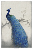 Peacock Blue II Giclee Print by Tim O'toole