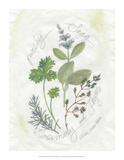 Parsley & Sage Giclee Print by Elissa Della-piana