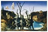 Cygnes réfléchissant des éléphants Posters