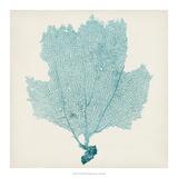 Sea Fan III Giclée-Druck von Tim O'toole