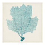 Sea Fan III Giclee Print by Tim O'toole