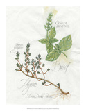 Basil & Thyme Giclee Print by Elissa Della-piana