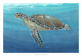 Ocean Sea Turtle II Giclee Print by Tim O'toole