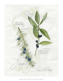 Bay Leaf & Juniper Giclee Print by Elissa Della-piana