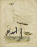 Embellished Crane & Heron Art by Alexander Wilson