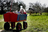 A Dutch Girl Enjoys the Sun While Resting in Her Cart in a Meadow in Oeffelt, the Netherlands Photographic Print by Robin Utrecht