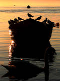 Sunshine over Boat with Bird on the Ohrid Lake, Macedonia Photographic Print by Georgi Licovski
