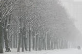 Two People Walk Along a Tree-Lined Snow-Covered Avenue Photographic Print by Sergei Ilnitsky