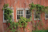 Barn Windows Photographic Print by Lynn Garwood