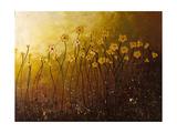 My Peaceful Place Giclee-trykk av Carmen Guedez