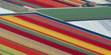 Aerial View of Fields of Flowers Near Lisse, Netherlands Photographic Print by Ed Oudenaarden