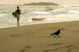 2 a Crow Walks While a Local Surfer Gets Out of the Water Photographic Print by Dai Kurokawa