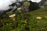 Valley of Flowers National Park Photographic Print by Harish Tyagi