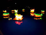 Lotus-Shaped Lanterns are Floated on a Pond in Wonju, Gangwon Province Photographic Print