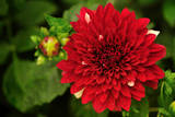 Close-Up of a Dahlia Flower Photographic Print by Jagadeesh Nv