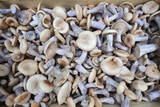 Imported Mushrooms Photographic Print by Everett Kennedy