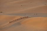 A Caravan of Camels Taking Tourists Up a Sand Dune Near Dunhuang Photographic Print by  Mark
