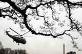 Marine One Helicopter Is Seen Behind the Limbs of a Tree on the South Lawn of the White House Photographic Print by Michael Reynolds
