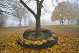 Autumnal Maple Leaves Cover a Bench and Ground around a Tree Photographic Print by Uwe Zucchi