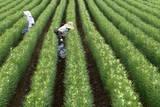 Japanese Agriculture Photographic Print by Dai Kurokawa