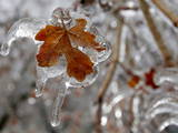 A Leaf Is Covered in Ice in Mcpherson Photographic Print by Larry W. Smith