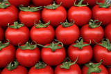 Lines of Tomatoes Photographic Print by Sergei Ilnitsky