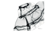 Editorial X-Ray Skirt Prints by Albert Koetsier