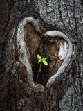 A Small Sunflower Sprout Grows Out of a Heart-Shape Knothole of a Tilia Tree in Lieberose Photographic Print by Patrick Peul