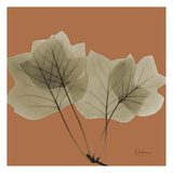 Tulip Tree Prints by Albert Koetsier