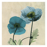 Iceland Poppy Duo Poster by Albert Koetsier