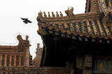A Bird Flies Between Ornamental Rooftops Inside the Forbidden City in Beijing, China Photographic Print by Michael Reynolds