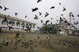A Kashmiri Muslim Feeds Pigeons in Srinagar, the Summer Capital of Indian Kashmir Photographic Print by Altaf Qadri