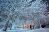 Pedestrians Passing the Illuminated Kurpark in a Fairytale-Like Atmosphere in Oberhof Photographic Print by Martin Schutt