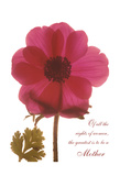 Magenta Magnolia Posters by Albert Koetsier