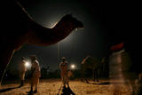 Rajasthani Camel Vendors and Camels During Evening in World Largest Cattle Fair in Puskar Photographic Print by Piyal Adhikary