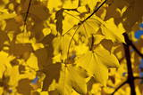 The Sun Shines Through the Colorful Autumn Leaves Photographic Print by Alessandro Della Bella