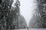 A Man Walks Through a Snow-And-Ice Covered Forest Near the Village of Karpavichi Photographic Print by Tatyana Zenkovich