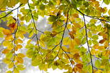 Autumn Leaves Photographic Print by Alessandro Della Bella