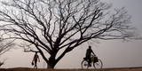 People Pass Some Barren Trees in the Outskirts of Guwahati City Photographic Print