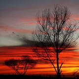 Trees in Sunset Photographic Print by Alejandro Zepeda