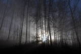 The Sun Shines Through a Fog-Shrouded Forest Area in Kerns Photographic Print by Urs Flueeler