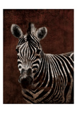 Zebra Poster by Jace Grey