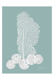 Sea Fan and Sand Dollar Teal Prints by Albert Koetsier