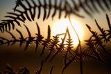The Sun Rises Behind a Dried Leaf of a Fern in Herdecke Photographic Print by Bernd Thissen