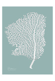 Sea Fan 2 Prints by Albert Koetsier