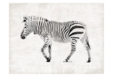 Zebra Prints by  OnRei